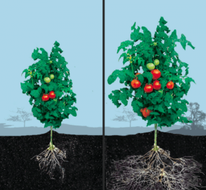 Image #2 plant with and without MF